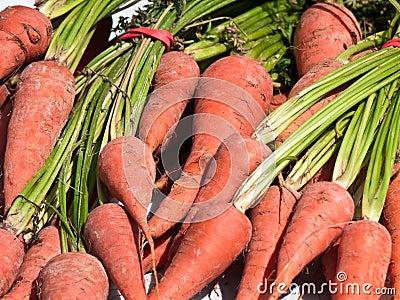 Fresh market carrots