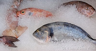 Fresh mediterranean fish on ice