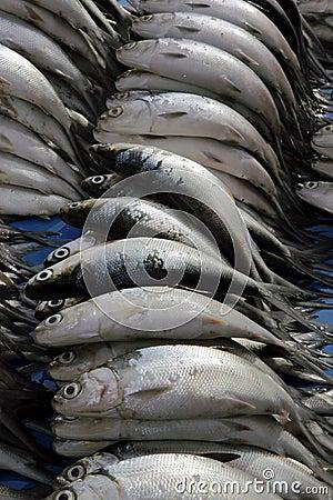 Fresh Milkfish
