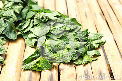 Fresh mint prepared for mojito