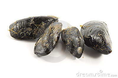 Fresh mussel on white