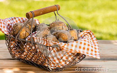 Fresh new potatoes in a metallic basket
