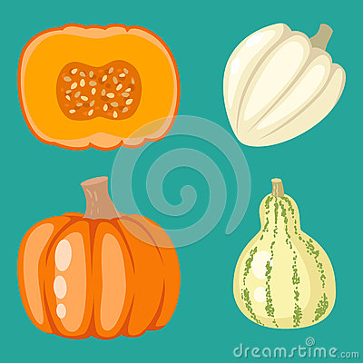 Fresh orange pumpkin decorative seasonal ripe food organic healthy vegetarian vegetable vector Vector Illustration