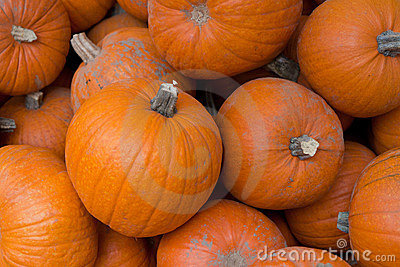 Fresh orange pumpkins