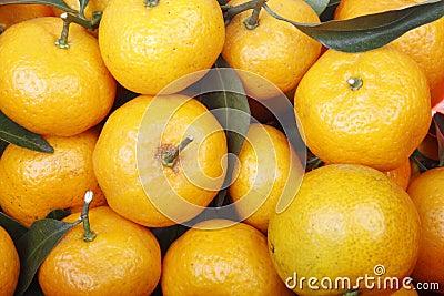 Fresh oranges.
