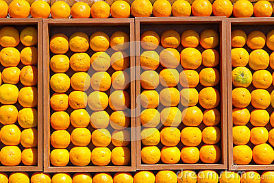 Fresh oranges in the box