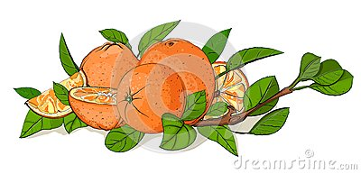 Fresh Oranges and Leaves Composition