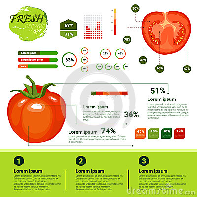 Fresh Organic Infographics Natural Vagetables Growth, Agriculture And Farming Vector Illustration