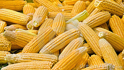 Fresh Organic Ripe Corns At A Street Market