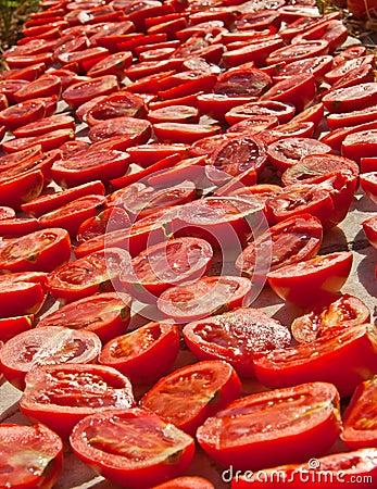 Fresh Organic Tomatoes Under Hot Sun To Dry
