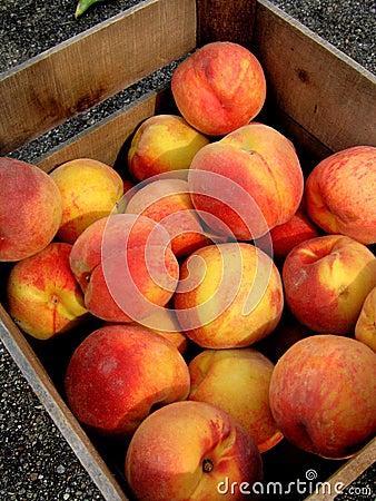 Free Fresh Peaches Stock Photos - 672683