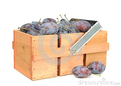 Fresh plums in a wooden box
