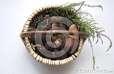 Fresh porcini mushroom in a basket