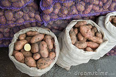 Fresh potatoes in a bags