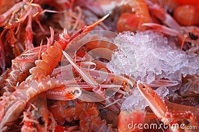 Fresh prawns on ice