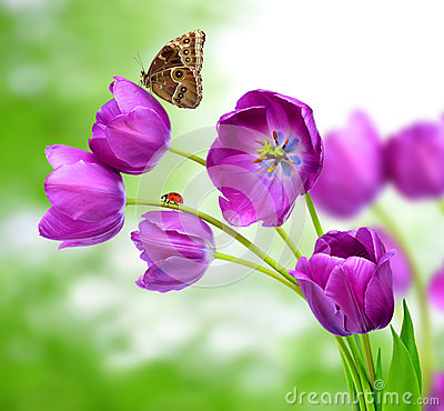 Fresh purple tulips with butterfly morpho