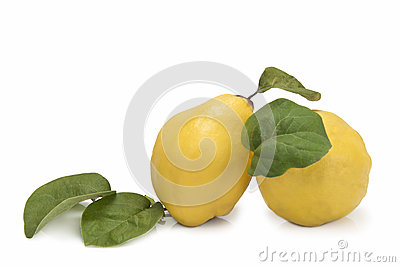 Fresh quinces  over white background