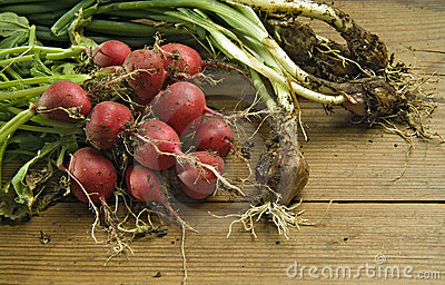 Fresh radishes and scallions