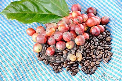 Fresh raw coffee beans with leaf