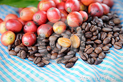 Fresh raw coffee beans with leaf