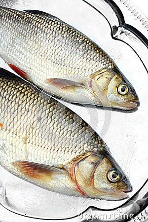 Fresh raw fish on a dish.