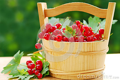 Fresh red currant in wooden basket