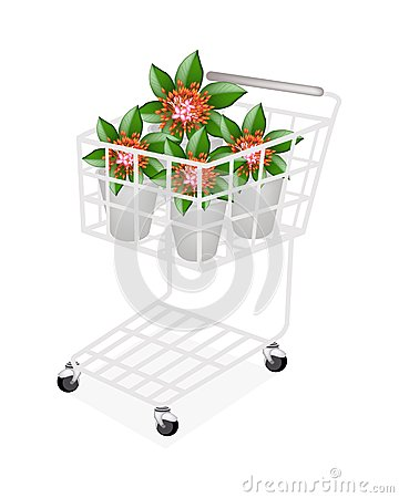 Fresh Red Ixora Flowers in A Shopping Cart