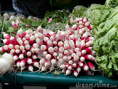 Fresh red radish at the farmer s market