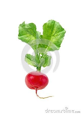Free Fresh Red Radish Isolated Stock Image - 25400731
