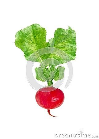 Free Fresh Red Radish Isolated On White Royalty Free Stock Photography - 37802077