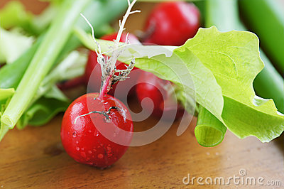 Fresh red radish and salad leaves