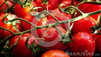 Fresh red ripe tomatoes stock footage