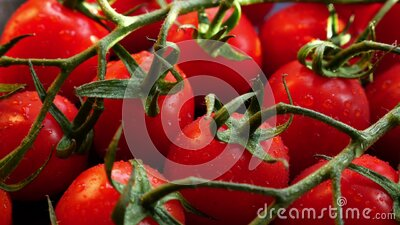 Fresh red ripe tomatoes stock video footage