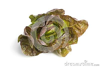 Fresh red Romaine lettuce
