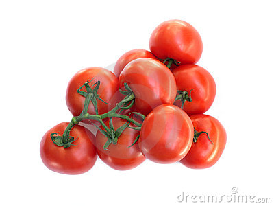 Fresh Red tomatoes on green branch isolated o