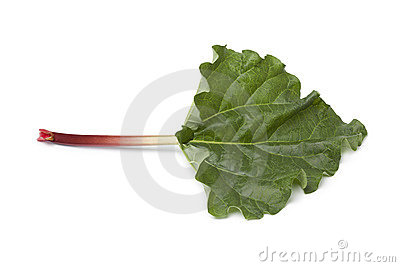 Fresh Rhubarb stalk and leaf
