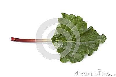 Fresh Rhubarb stalk and leaf