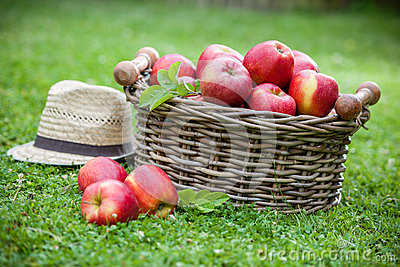 Fresh ripe apples in basket