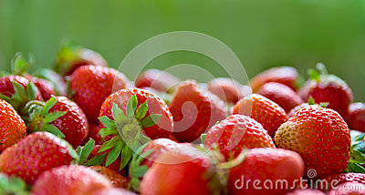 Fresh ripe perfect strawberry