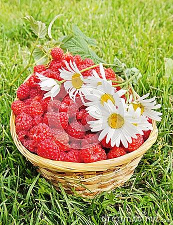 Fresh ripe raspberry and flowers