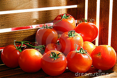 Fresh Ripe Red Tomatoes in Farmer Wood Crate