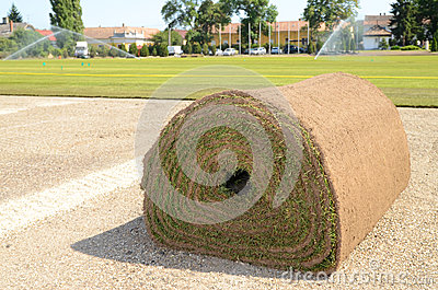 Fresh rolled-up grass turf