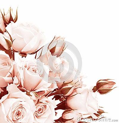 Free Fresh Roses Border Stock Images - 23501194