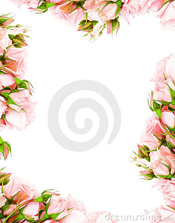 Free Fresh Roses Frame Stock Images - 18632164