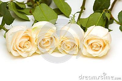 Fresh roses isolated on the white background