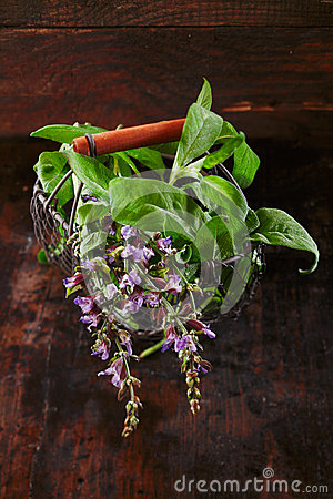 Fresh sage in a rustic wire basket
