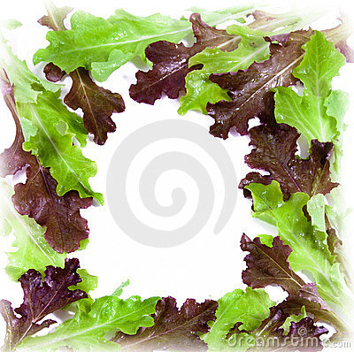Fresh salad frame with water drops