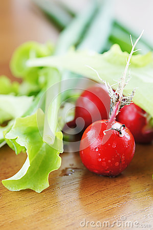 Fresh salad leaves  and red radish on a table