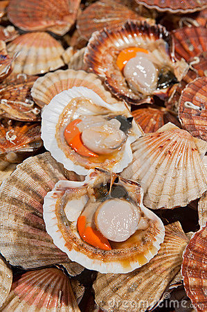 Fresh scallops at fish market