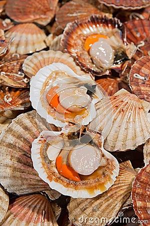 Fresh scallops at fish market